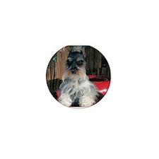 Watch My Schnauzer Grow Mini Button (100 pack)