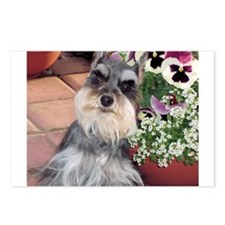 Schnauzer and the Pansies Postcards (Package of 8)