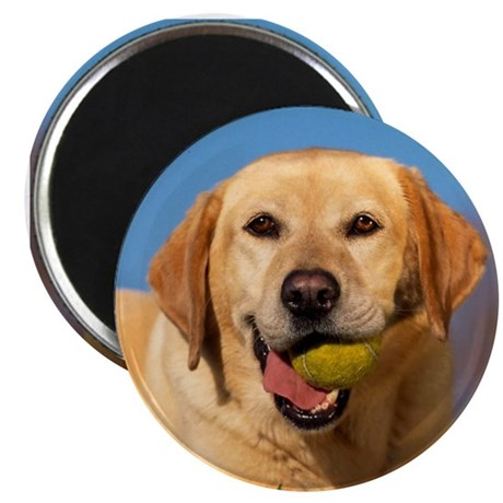 "YELLOW LAB 2.25"" Magnet (100 pack)"