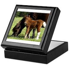 Cute Shetland pony Keepsake Box