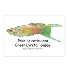 Green Lyretail Guppy Postcards (Package of 8)
