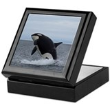Killer whale Square Keepsake Boxes