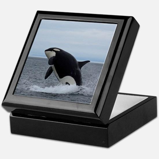 Keepsake Box-Whale (Orca)