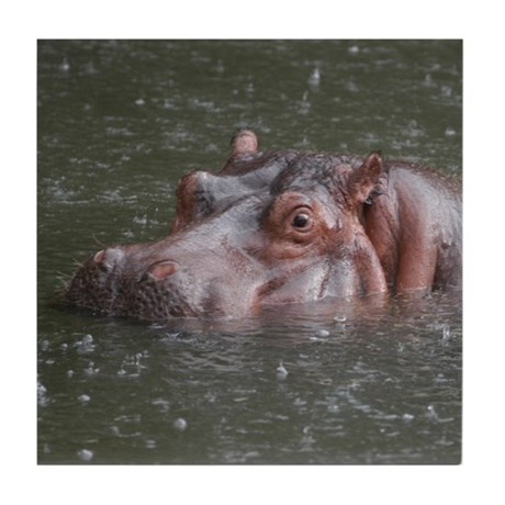 Hippo Ceramic Coaster
