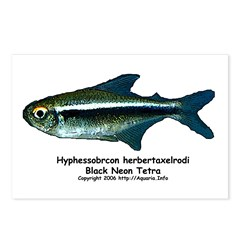 Black Neon Tetra Postcards (Package of 8)