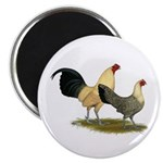 "OE Bantams Cream Buttercup 2.25"" Magnet (100"