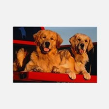 GOLDEN RETRIEVER PICKUP Rectangle Magnet