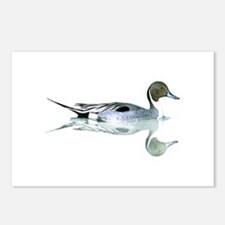 Pintail Drake Reflection Postcards (Package of 8)
