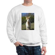 Ain't She Cute! Sweatshirt