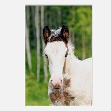 Cool Tinker horse Postcards (Package of 8)