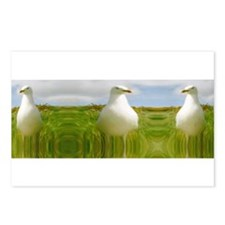 Cool Gull Postcards (Package of 8)