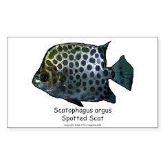 Scatophagus argus Rectangle Sticker