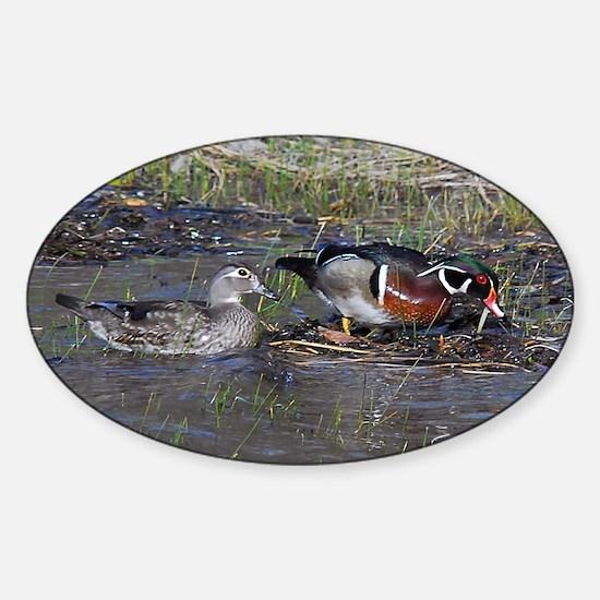 Wood Duck Pair Sticker (Oval)