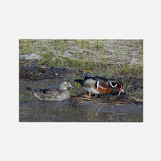 Wood Duck Pair Rectangle Magnet