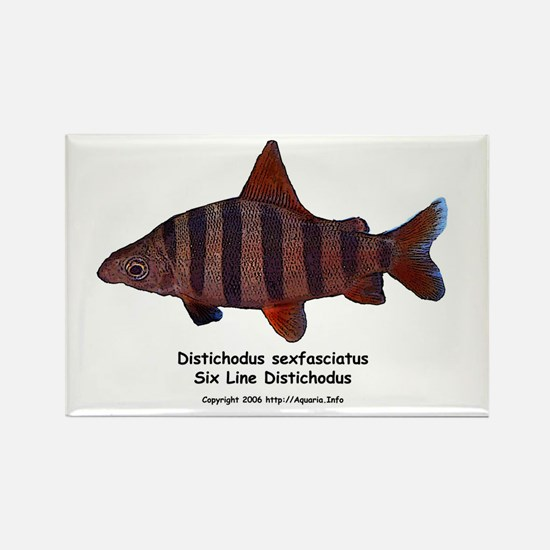 Distichodus sexfasciatus Rectangle Magnet