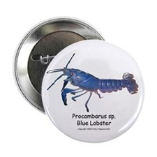 Blue Lobster Button