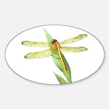 Golden Dragonfly Oval Decal