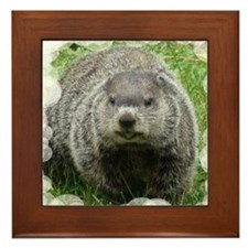 Groundhog (Woodchuck) Framed Tile