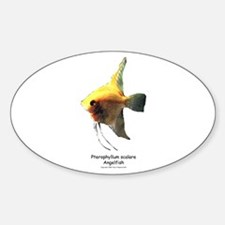 Angelfish Oval Decal