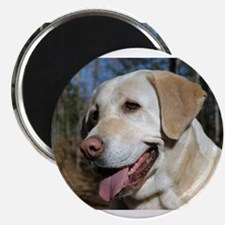 Cute Yellow lab Magnet