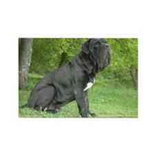 Cute Neapolitan mastiff Rectangle Magnet (100 pack)