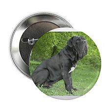 """Cute Neapolitan mastiff 2.25"""" Button"""