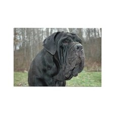 Cool Neapolitan mastiff Rectangle Magnet (100 pack)