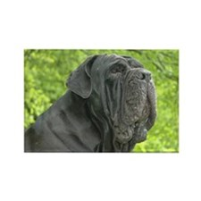 Unique Neapolitan mastiff Rectangle Magnet (100 pack)