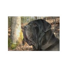 Funny Neapolitan mastiff Rectangle Magnet (100 pack)