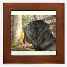 Cute Neapolitan mastiff Framed Tile