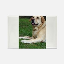 Cute Fat dog Rectangle Magnet