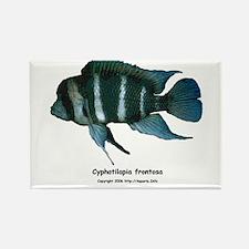 Cyphotilapia frontosa Rectangle Magnet