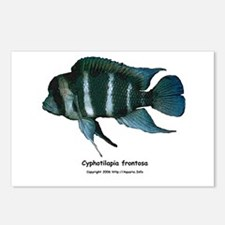 Cyphotilapia frontosa Postcards (Package of 8)