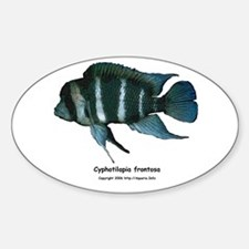 Cyphotilapia frontosa Oval Decal