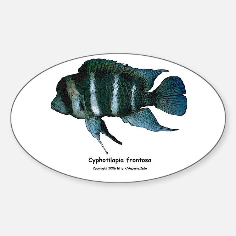 Cyphotilapia frontosa Oval Decal