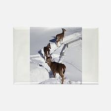 Deer Rectangle Magnet (100 pack)