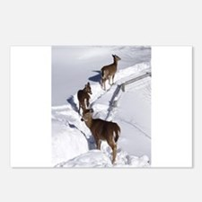Deer Postcards (Package of 8)