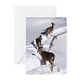 Wilderness christmas Greeting Cards (20 Pack)