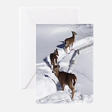 Deer Greeting Cards (Pk of 20)