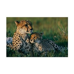 Female Cheetah and her Cub Posters