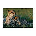 Female Cheetah and her Cub Mini Poster Print