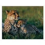 Female Cheetah and her Cub Small Poster