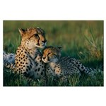 Female Cheetah and her Cub Large Poster