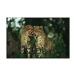 Nuzzling Cheetah Cubs Mini Poster Print