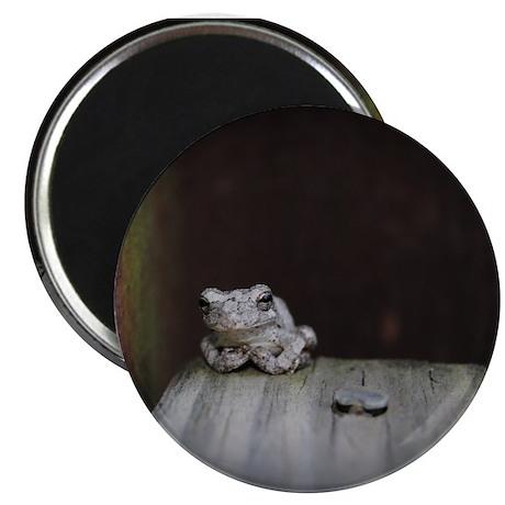 """Frog 2.25"""" Magnet (10 pack)"""