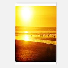 Sunset N Seabirds Postcards (Package of 8)
