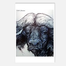 Musk Ox, Stunning, Postcards (Package of 8)