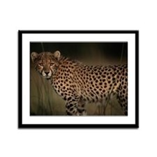 Cheetah in the Grass Framed Panel Print