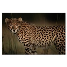 Cheetah in the Grass Large Poster