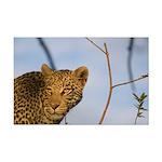 Leopard Mini Poster Print